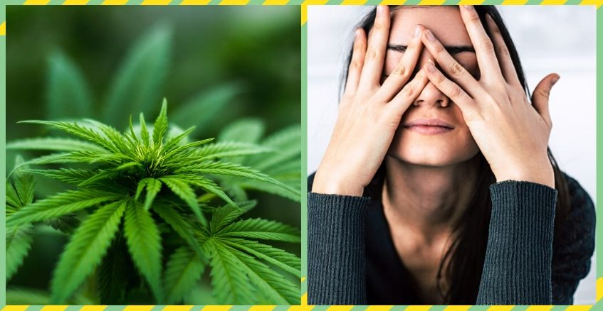 Bust Your Stress With The Help of Cannabis